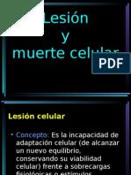 Lesión y Muerte Celular