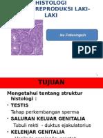 Histologi Reproduksi Laki-laki