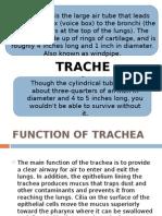 Presentation TRACHEA