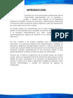 ÁCIDOS GRASOS SATURADOS E INSATURADOS.docx