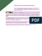 El Aceite de Oliva y Los Frutos Secos Previenen El Deterioro Del Cerebro