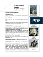 Ficha Tecnica Arbol Adoptado Eucalipto
