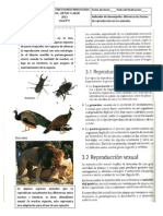 Rep Animales