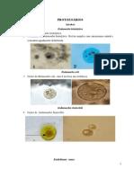 Atlas de parasitologia clinica