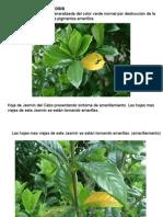 sintomas1-140507181907-phpapp01