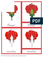 Parts of the Flower Primary Nomenclature Cards (Red Isolation) d'Nealian
