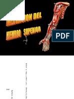 Anatomía de Miembro Superior 2015