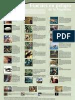 Especies en Peligro Poster