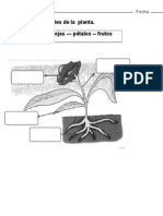 EXAMEN PRIMER GRADO NATURALES.docx