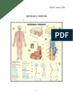 7 Sistemul nervos