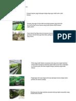 lanskap.pdf