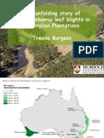 Enfermedades en Eucaliptus -Teratosphaeria en Australia(1)