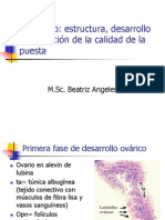 Ovogenesis y Vitelogenesis