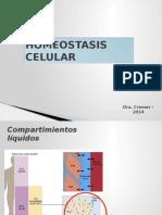 Homeostasis Celular 14