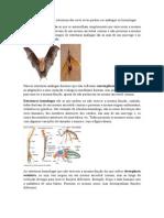 Filogenia.docx