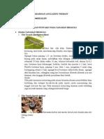 Hama Dan Penyakit Pada Tanaman Brokoli