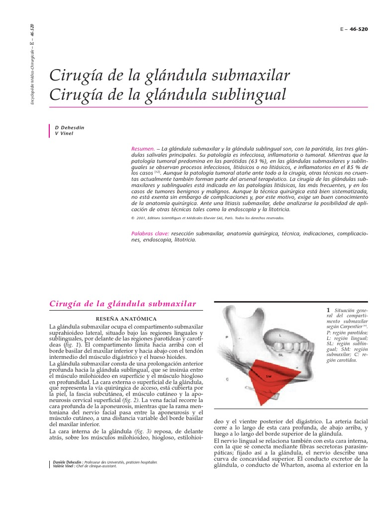 Vistoso Anatomía Glándula Submandibular Motivo - Anatomía de Las ...