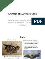 animals of northern utah