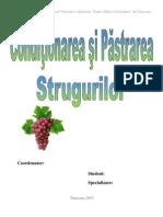 Rada Alexandru - Conditionarea Si Pastrarea Strugurilor