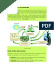 Materia y Energía en Los Ecosistemas