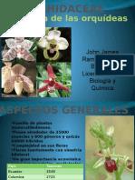 Familia Orchidaceae (orquídeas)
