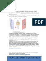 Morfología Generalidades