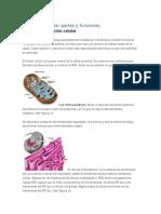 Estructura celular partes y funciones.docx