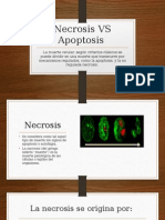 Necrosis vs Apoptosis