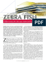 Zebra Fish - Nutrition for the new laboratory rat