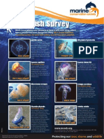 Marine Conservation Society Jellyfish Guide