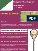 AntBiol_TP2_ 1°parte Mendel