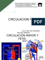 Circulación Fetal