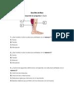 Guía Ciencias Cuarto Básico