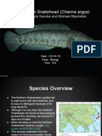 northern snakehead presentation (1)