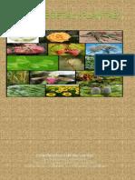 Reino Vegetal (Plantae)