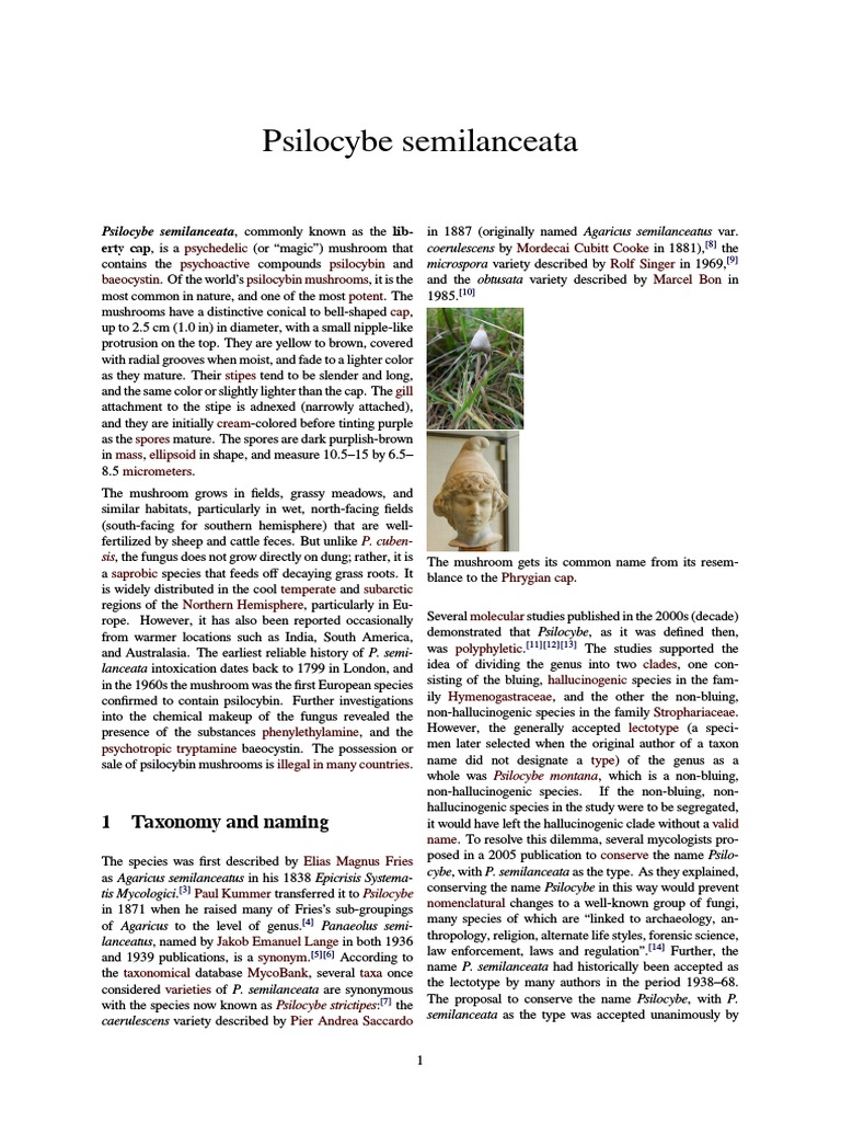 Psilocybe semilanceata   Psilocybin   Fungus