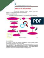 EMBARAZO EN ADOLESCENTES.docx