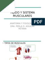 Tejido y Sistema Musculares