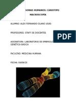 Idiograma