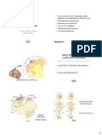 PPT-NEUROFISIOLOGIA