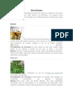 Tipos de Drogas y Tipos de Consumo