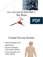 structures of nervous system