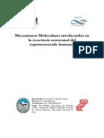Mecanismos moleculares involucrados en la exocitosis acrosomal del espermatozoide humano