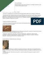 Principales Plagas Del Maiz en Guatemala
