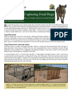 Box Traps for Capturing Feral Hogs