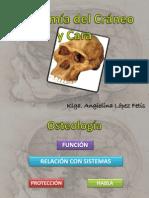 Anatomía del Cráneo.pdf