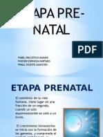 Etapa prenatal