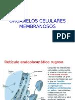 Organelos Celulares Membranosos