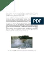 Adubação e colheita do amendoim.doc