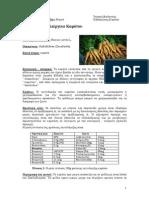 Βιολογική Καλλιέργεια Καρότου